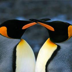 Penguin 07.24.2012 help