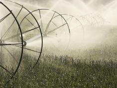 Irrigation Sprinkler Spraying Water on Farm Field