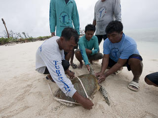 WWF researcher and Tubbataha ranger Choy Calagui and other rangers measure a green turtle