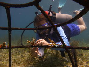Mesoamerican_Reef_7.25.12_Resilient_Coral