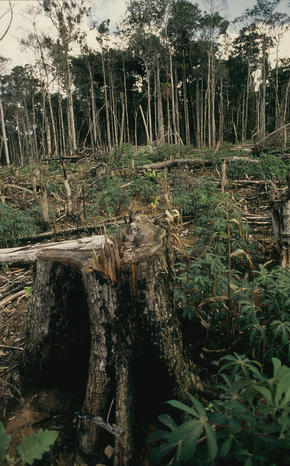 Una Biological Reserve, Bahía, Brazil Deforestation