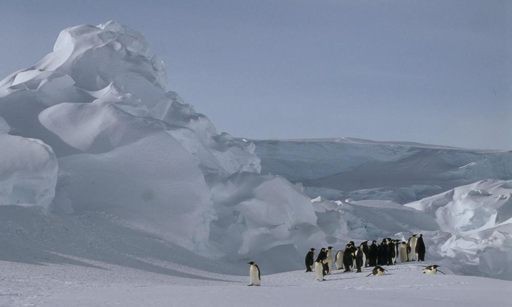 Species Spotlight: Emperor Penguin | Pages | WWF