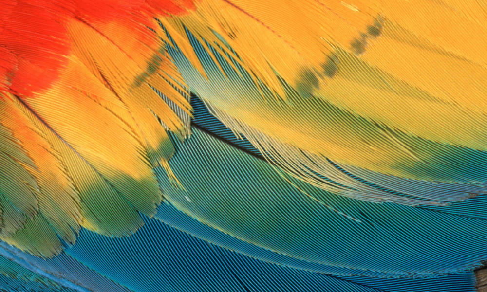 Vibrant scarlet macaw feathers