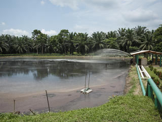 Waste water gets filtered and treated at the Agrocaribe palm oil plantation in Guatemala.