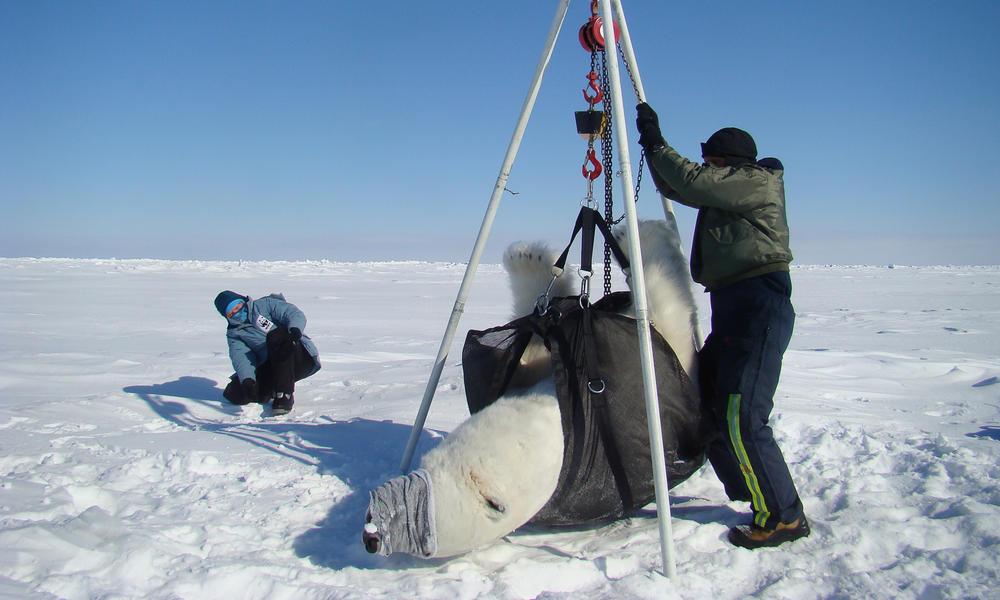 polar bear teepee