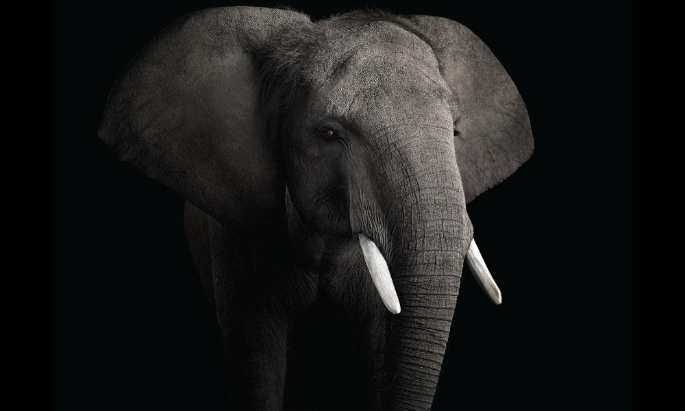 African Elephant #2 by Brad Wilson