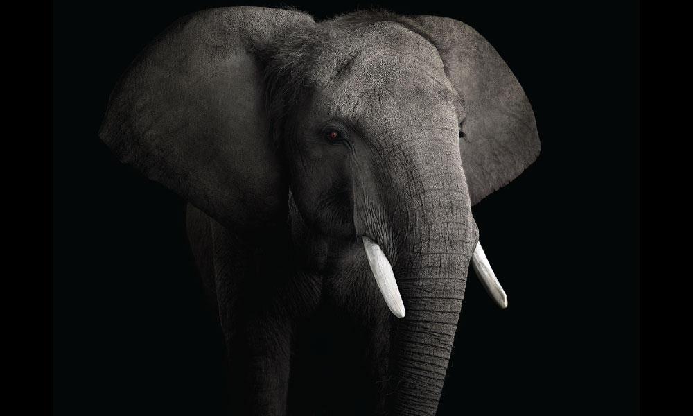 African Elephant #2 by Brad Wilson