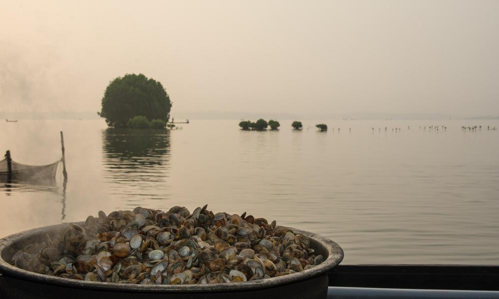 clam steam