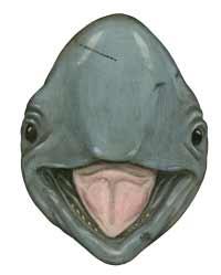 Irrawady dolphin