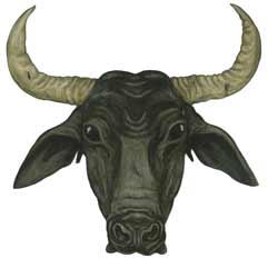 Wild Water Buffalo illustration