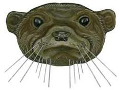 Smooth-coated otter illustration