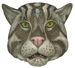 Fishing cat illustration