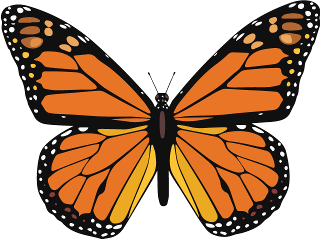 Image result for butterfly monarch
