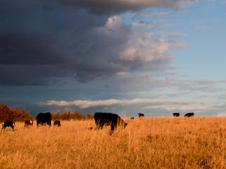 Ranching in Mullen, Nebraska