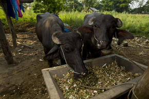 Eastern Himalayas Habitat Loss