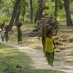 Women carrying wood from community forests that are managed by Community Forest Co-ordination Committees (CFCC) in Thagugwara area, Royal Bardia National Park, Western Terai, Nepal.