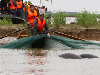 capturing finless porpoise