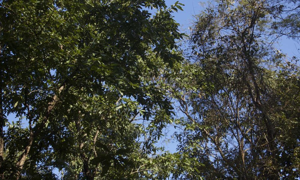 Churia forest 1