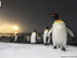 OurPlanet Penguins HI 331894