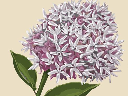 Fije su aflutter del jardín con pentas y otras plantas amigables con las mariposas | NOLA.com