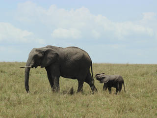elephants and mom