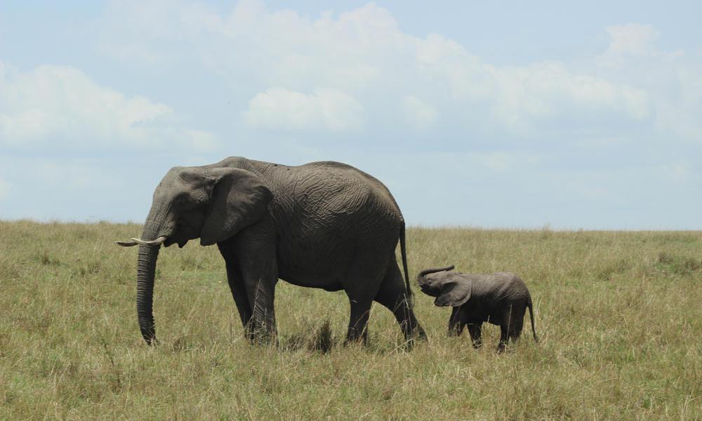 elephants and mom
