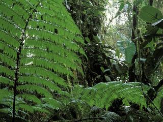 choco darien forest