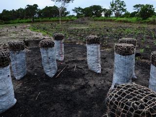 deforestation east africa