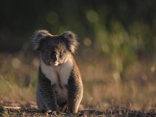 eastern australia deforestation