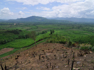 greater mekong deforestation