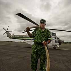 Norbert Pradal, the conservateur of Wanga Wangue presidential reserve displays two elephant tusks conficscated from poachers in front of the an anti poaching patrol helicopter.
