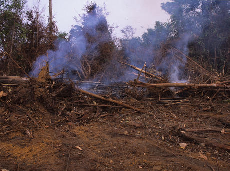 borneo deforestation