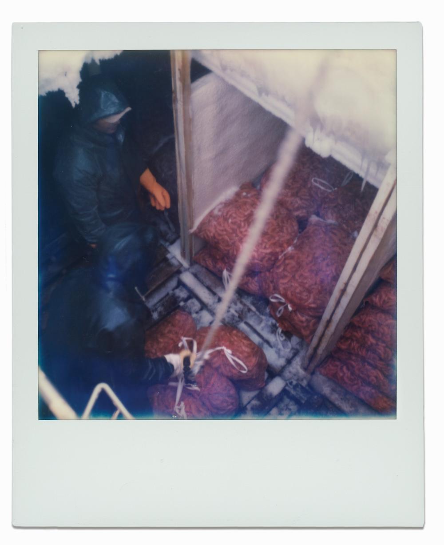 A Wallis Brothers' deckhand unloads bails of frozen shrimp.
