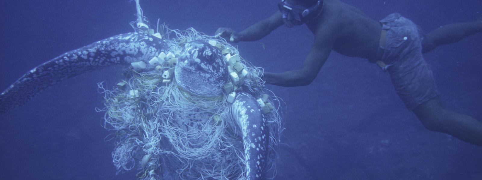 Resultado de imagem para bycatch turtle