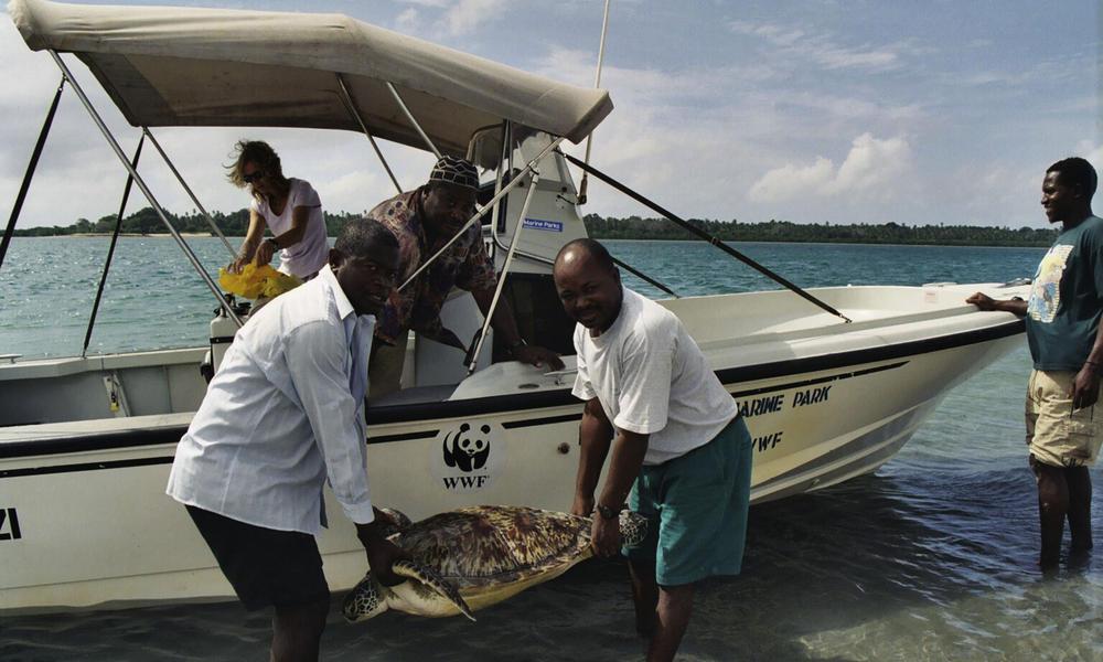 Bycatch | Threats | WWF