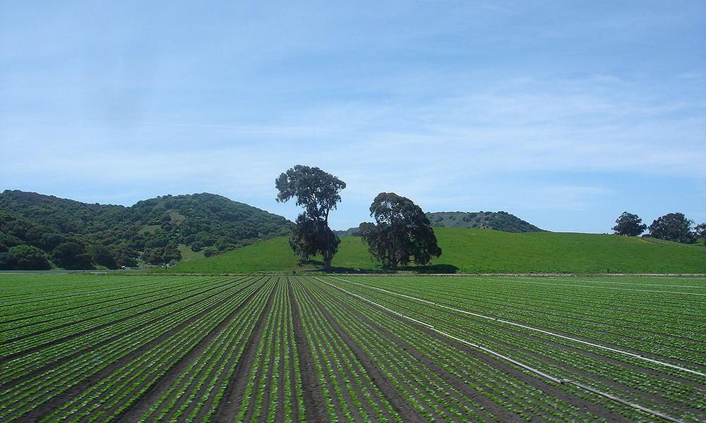 Fields near Greenfield, California