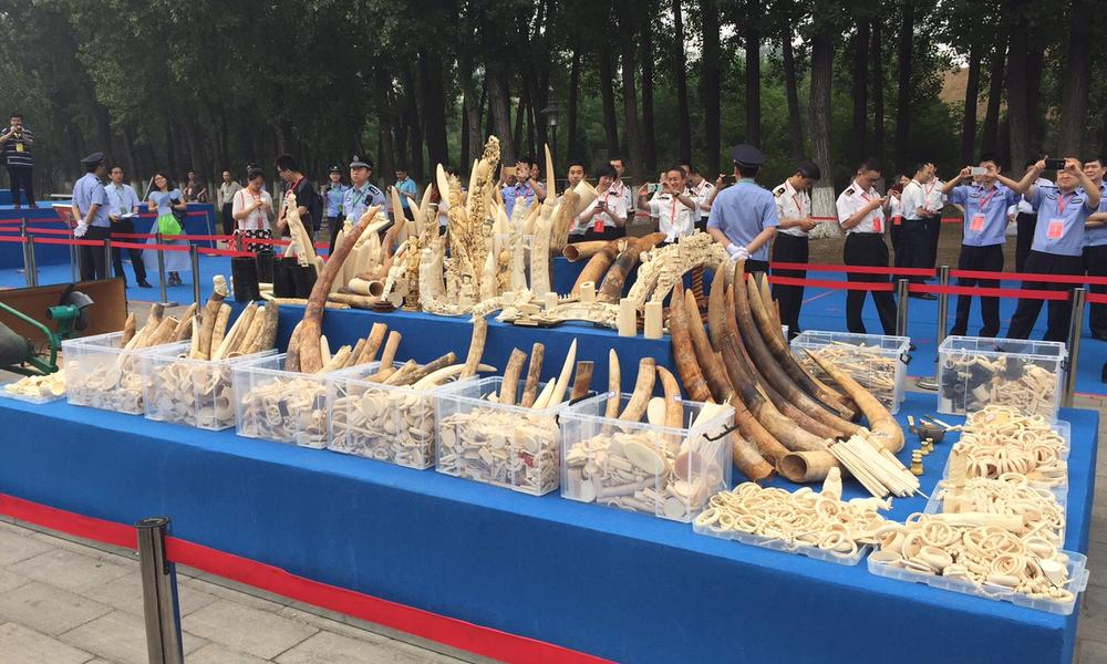 ivory stockpile in China