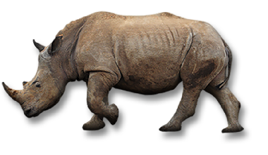 Rhino Facts and Species   Pages   WWF