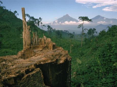 Deforestation for fuel by Hutu refugees