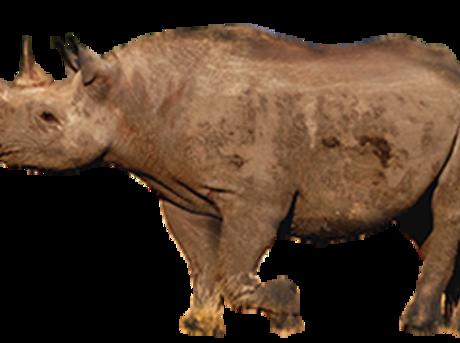 Rhino | Species | WWF