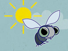 fly and sun