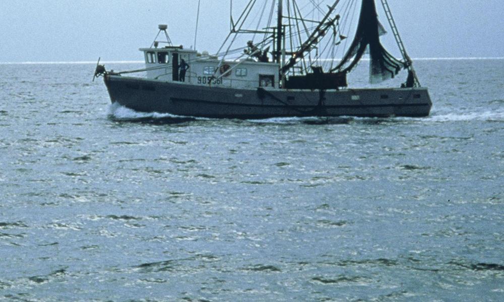 Shrimp trawler_1COLUMN
