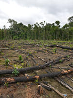 Research on deforestation