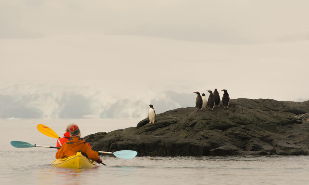 Kayaking near penguins