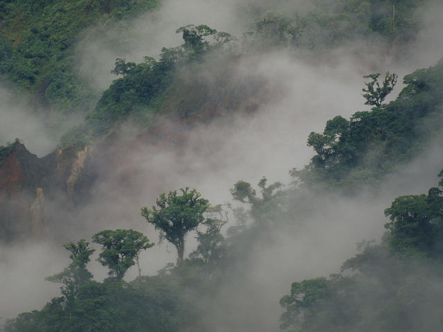 Forest in Ecuador