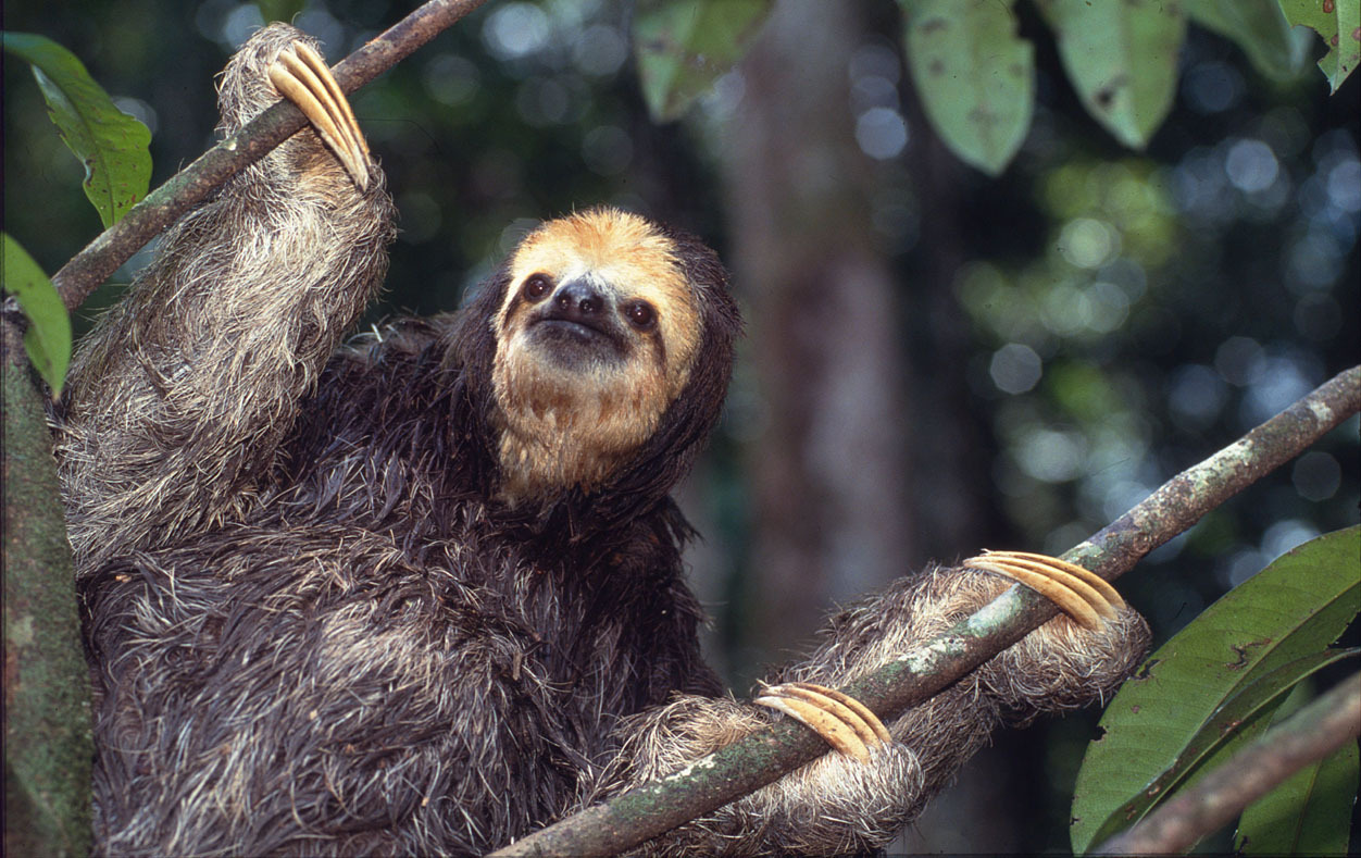 "sloth"""
