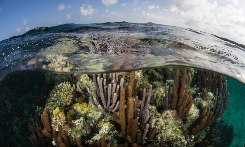 Turneffe Atoll coral