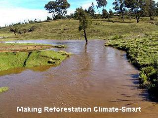 aking Reforestation