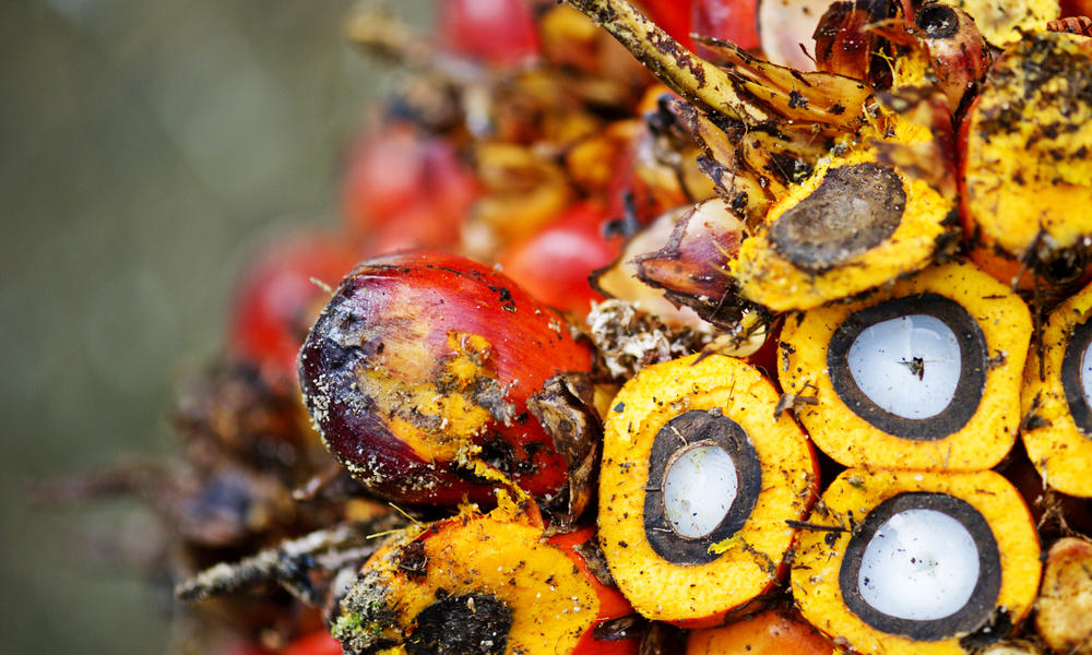 Close-up of palm fruit, Sumatra, Indonesia
