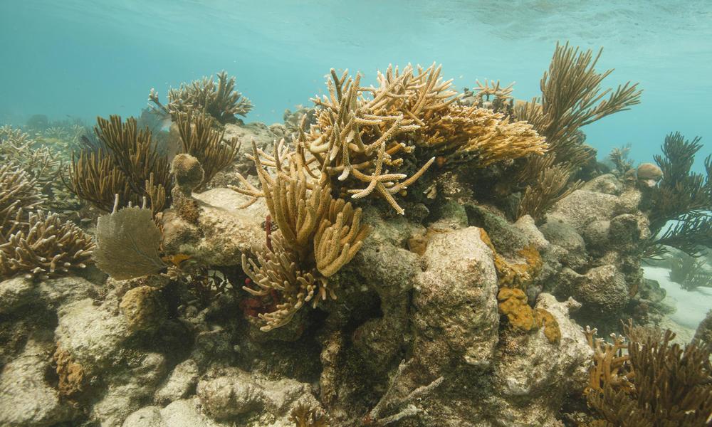 Mexico Mesoamerican Reef